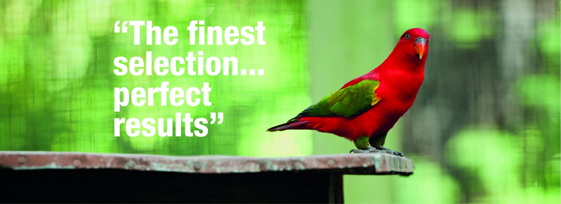 banner_birds_F