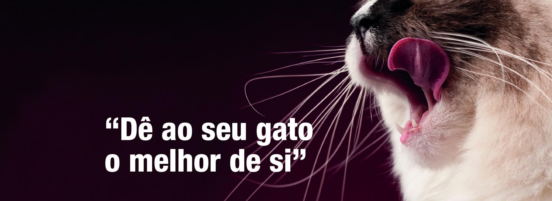 banner_gatos_F