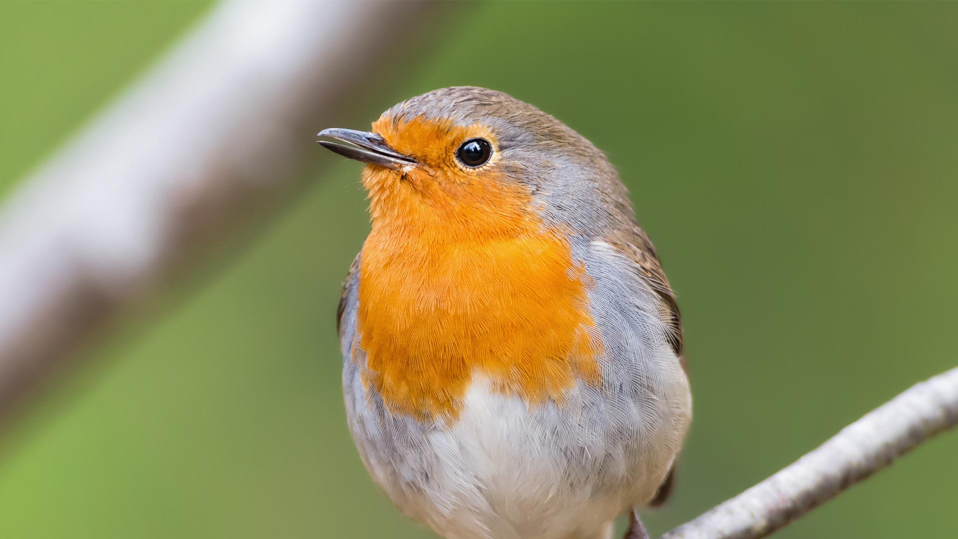 separador_birds