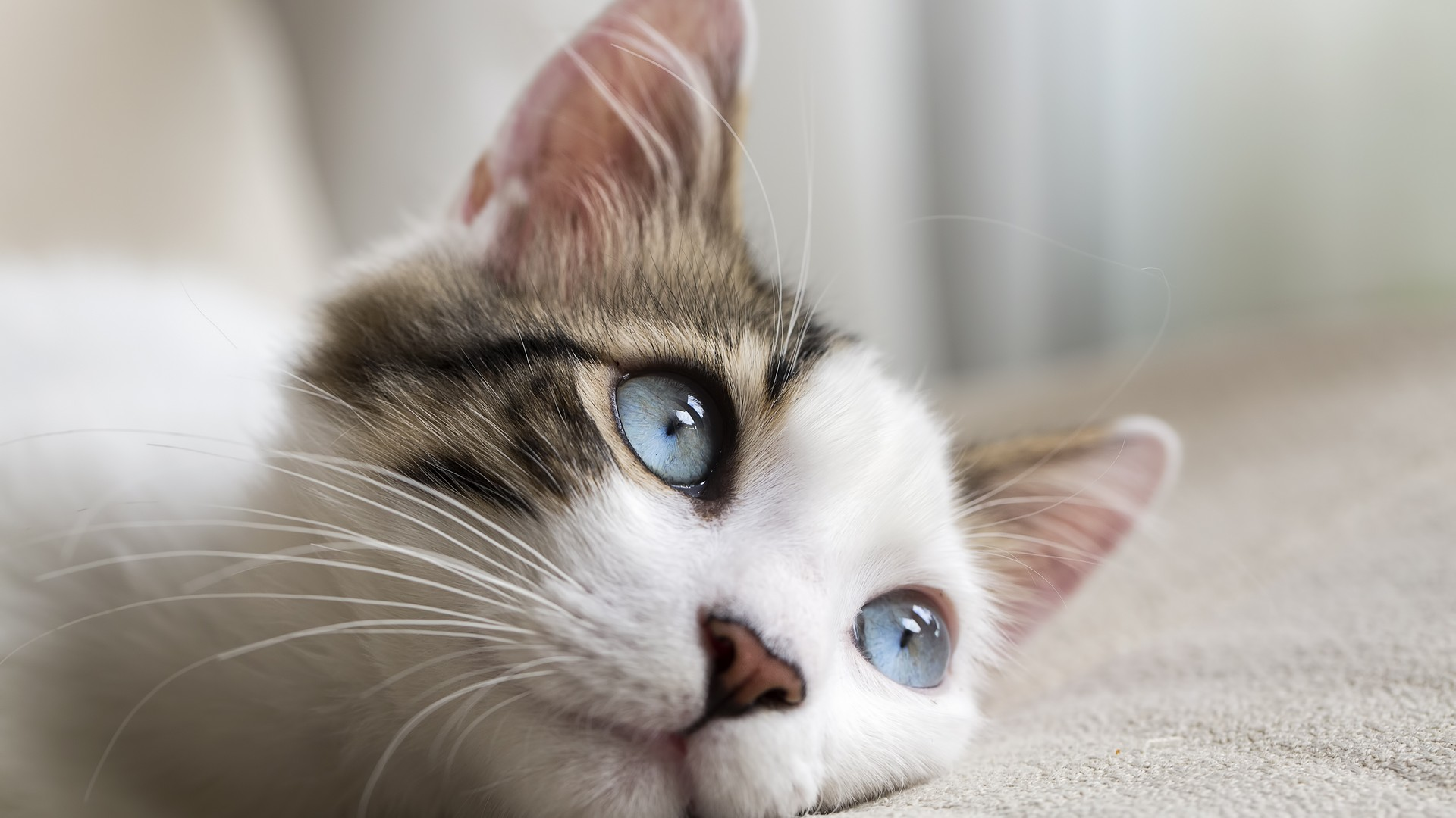 separador_cats