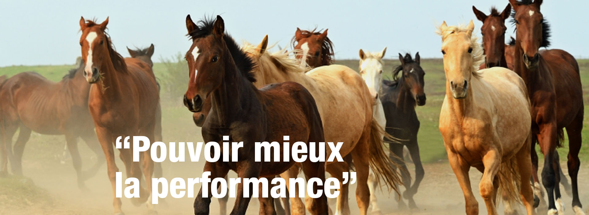 banner_cavalos_F