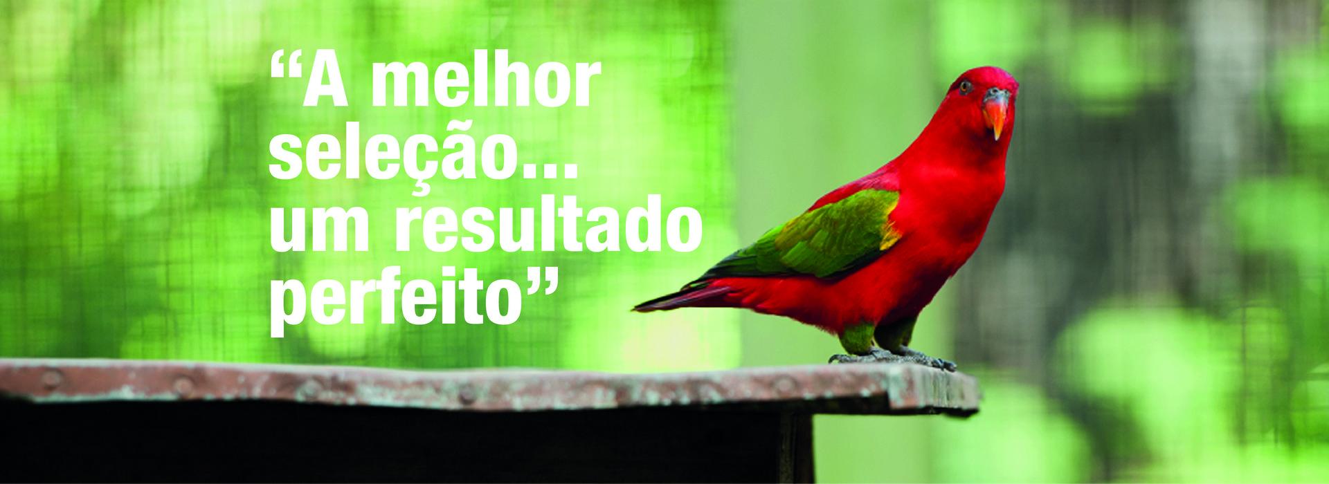 banner_passaros_F