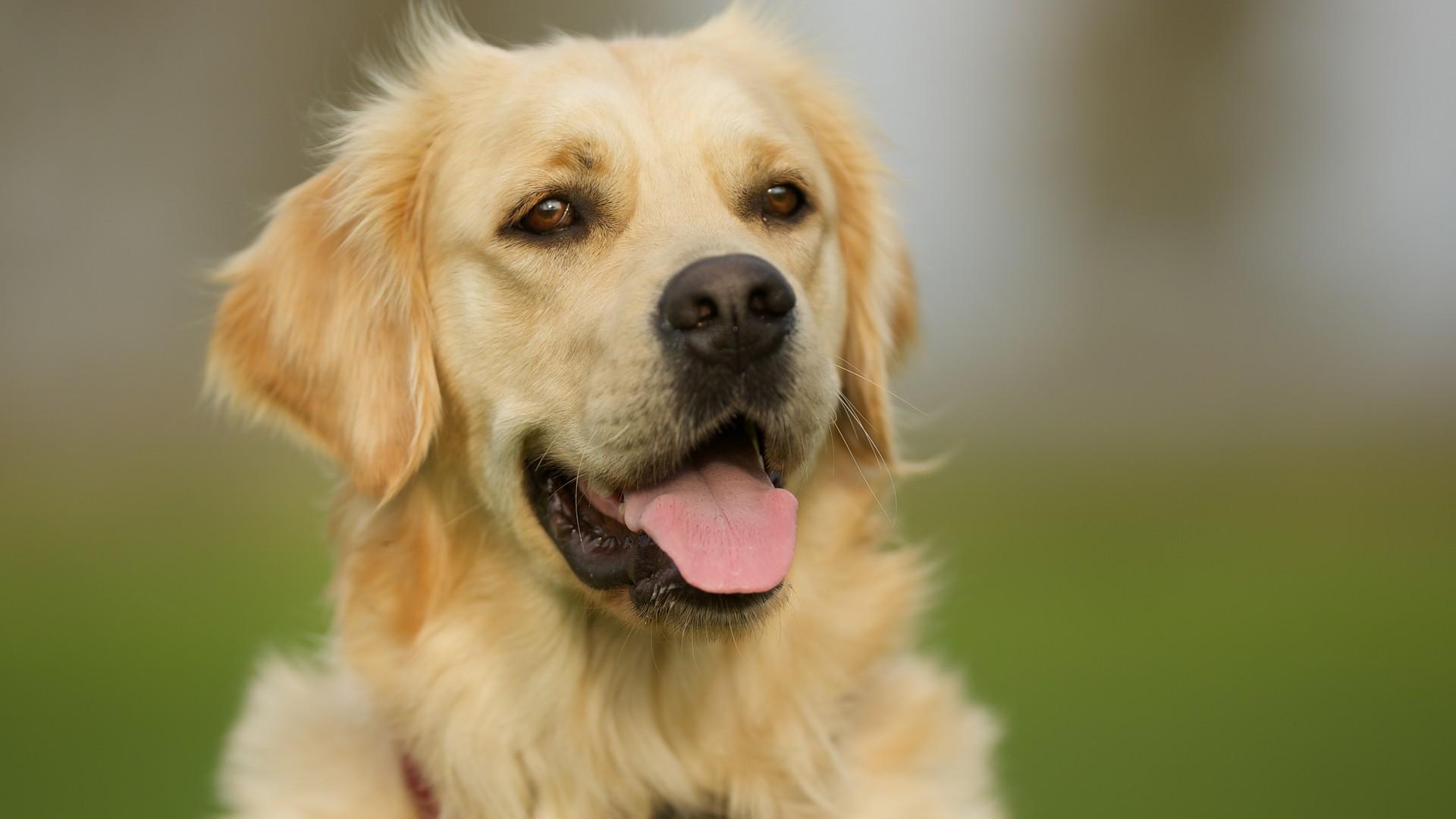 separador_dogs